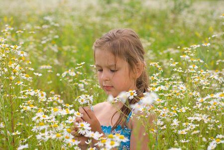 Little girl picking flowers on chamomile field Stock Photo