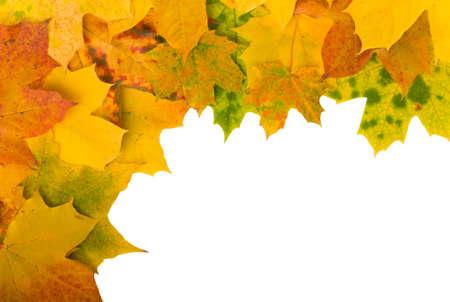 Angular frame of autumn maple leaves on white background