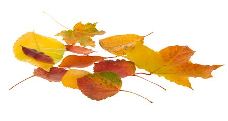Autumn leaves falling  isolated on white background Stock Photo