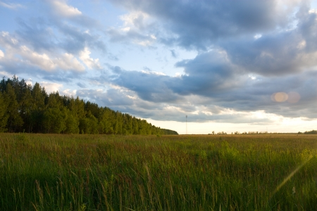 Summer landscape with grass, trees and clouds Stock Photo