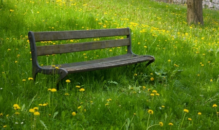 wooden bench in a meadow with dandelions