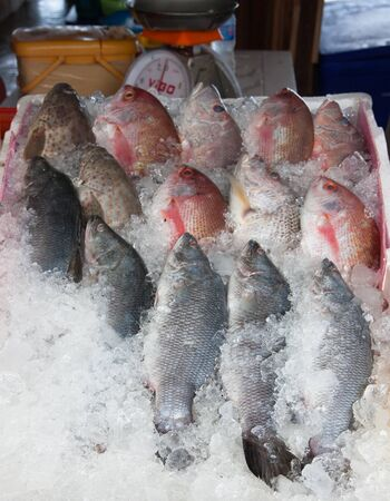 Fresh red fish on ice for sale at sea market