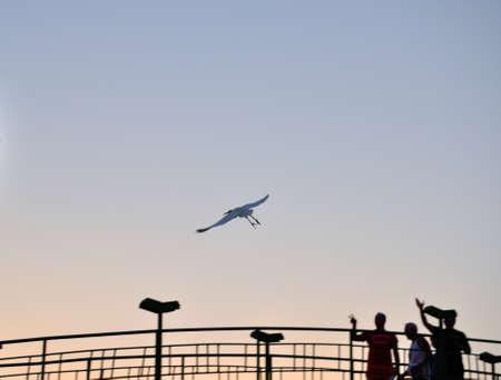 Flying stork in clear Hurgada Sky. Egypt. photo