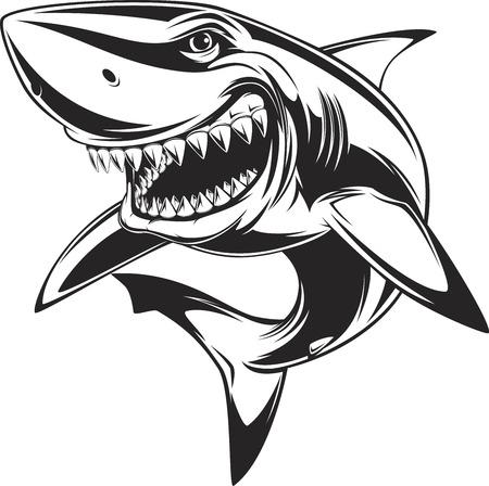tiburon caricatura: Vector de la ilustraci�n: tibur�n blanco dentudo Vectores