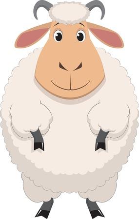 sheep wool: Vector illustration, cartoon baby sheep