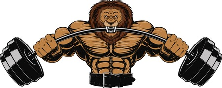 bodybuilder man: illustration of an angry lion with a barbell
