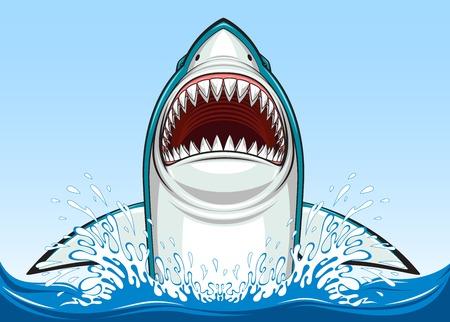 white shark: Vector illustration, toothy white shark