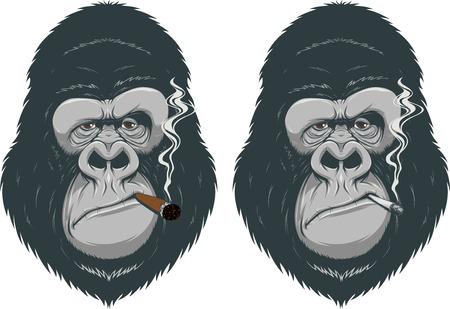 mono caricatura: Ilustración del vector, mono que fuma un cigarrillo Vectores