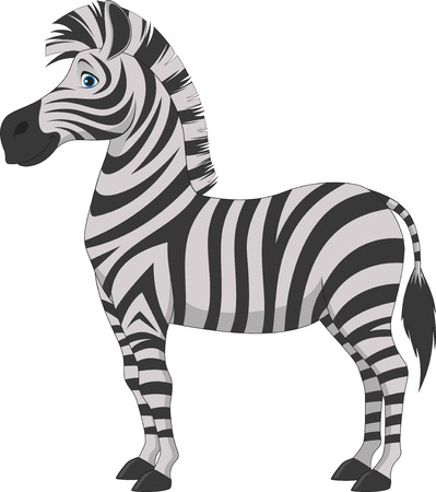 Vector illustration, fun zebra on a white background