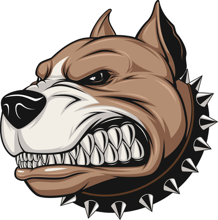 ferocious: Vector illustration Angry pitbull mascot head, on a white background