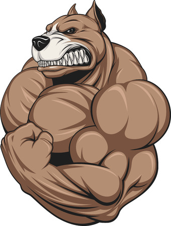 Vector illustration of a strong  pitbull with big biceps