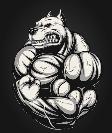 pit: Vector illustration of a strong  pitbull with big biceps
