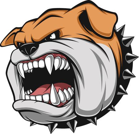 perro caricatura: Ilustración vectorial cabeza de la mascota bulldog enojado, sobre un fondo blanco