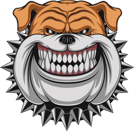 design bad: Vector illustration Angry bulldog mascot head, on a white background Illustration