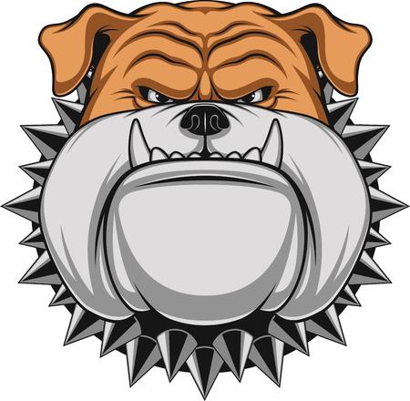 perro furioso: Ilustraci�n vectorial cabeza de la mascota bulldog enojado, sobre un fondo blanco