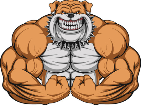 Vector illustration of a strong  bulldog with big biceps Vectores