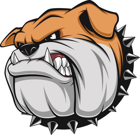 collarin: Ilustraci�n vectorial cabeza de la mascota bulldog enojado, sobre un fondo blanco