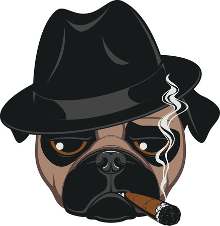 cartoon gangster: Portrait of Pug-dog with Cigar, Cool Guy, Gangster Look