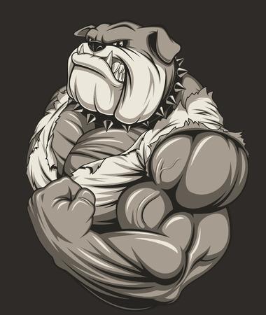 bodybuilder: Ilustración vectorial de un fuerte bulldog con grandes bíceps