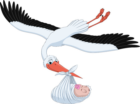 Vector illustration, stork brings the baby in its beak, on a white background Illustration
