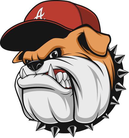 Illustrazione vettoriale, un feroce bulldog indossa un berretto da baseball cap, su uno sfondo bianco