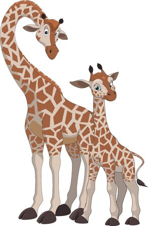 giraffa: Vector illustration, of an adult giraffe and baby giraffe, on a white background