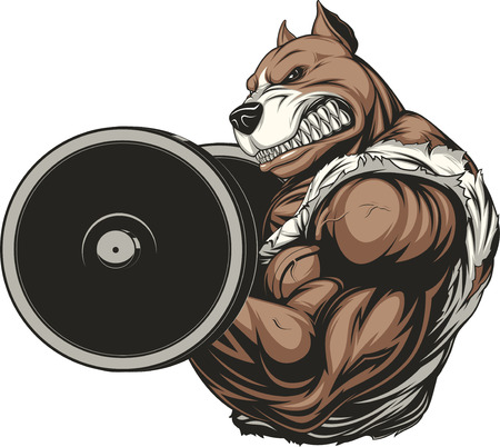bodybuilding: illustration of a ferocious pitbull raises the barbell on biceps