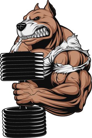 pesas: ilustración de un pitbull feroz levanta las pesas en el bíceps