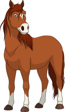 illustration adult funny horse smiling on a white background Illustration