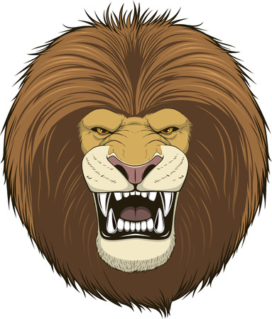 angry lion: Vector illustration of a head fierce lion on a white background