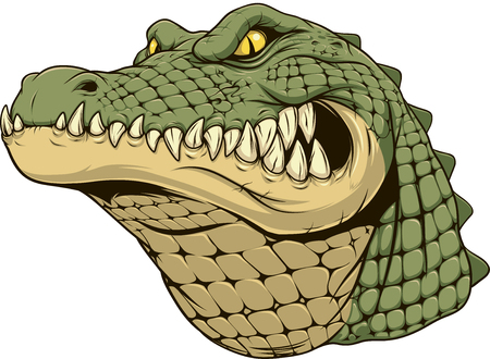 Vector illustration, a ferocious alligator head on a white background. Çizim