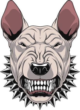 bullterrier: Vector illustration Angry bullterrier mascot head, on a white background Illustration
