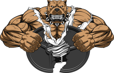 Vector illustration of a strong  pitbull with big biceps, break barbell, bodybuilder