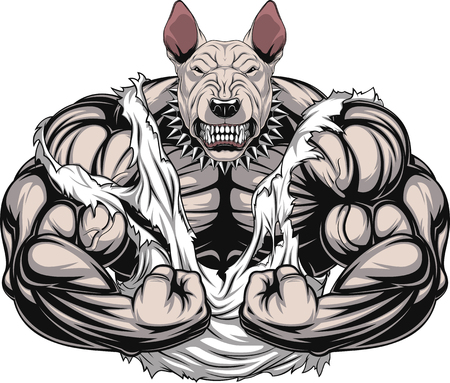 Vector illustration of a strong  bullterrier with big biceps, bodybuilder
