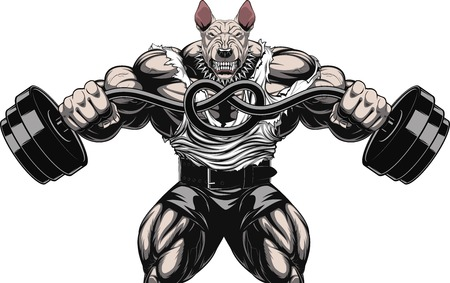Illustrazione vettoriale di un forte bull terrier con grandi bicipiti, si piega il bilanciere, bodybuilder