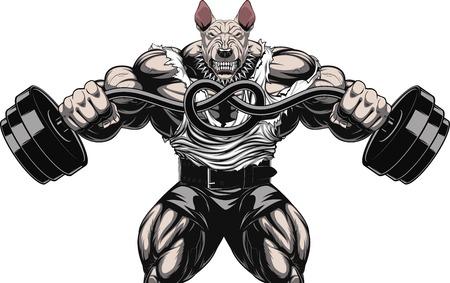 bullterrier: Vector illustration of a strong  bullterrier with big biceps, bends the barbell, bodybuilder Illustration