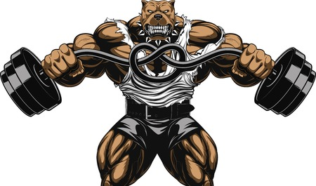 Vector illustration of a strong  pitbull with big biceps, bends the barbell, bodybuilder Vectores