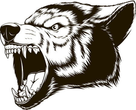 Vector illustration head ferocious wolf, outline silhouette on a white background