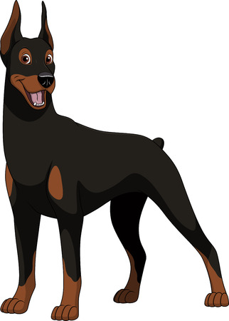 Vector illustration, funny purebred dog, Doberman, on a white background