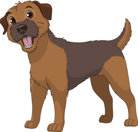 Vector illustration, funny purebred dog, Border Terrier, on a white background Ilustracja