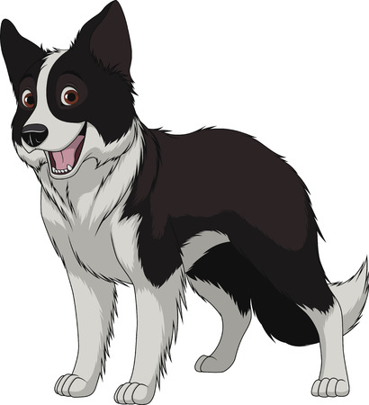 Vector illustration, funny purebred dog, Border Collie, on a white background