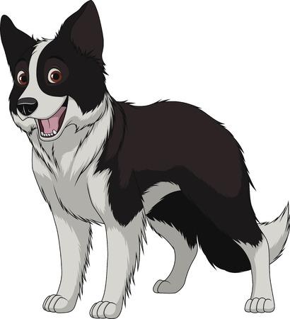 Vektor-Illustration, lustige reinrassigen Hund, Border-Collie, auf einem weißen Hintergrund Standard-Bild - 73765850