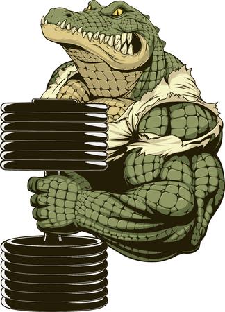 Ilustración del vector, un cocodrilo fuerte feroz, culturista, realiza levantamiento de pesas al bíceps. Ilustración de vector