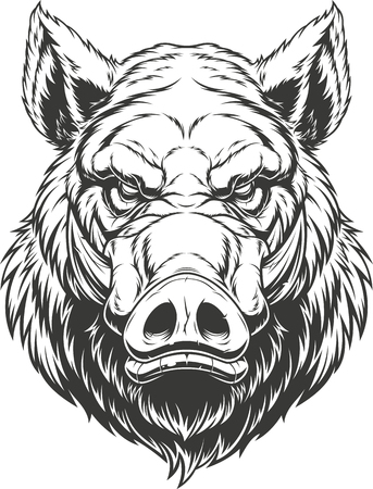 Vector illustration, the head of a ferocious wild boar, on a white background.