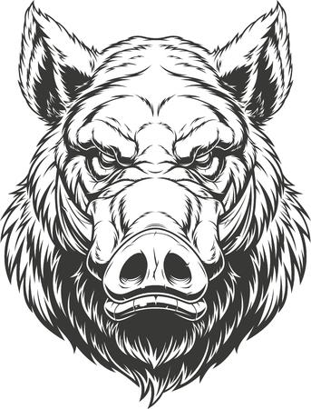 Ilustración de vector, la cabeza de un feroz jabalí, sobre un fondo blanco.