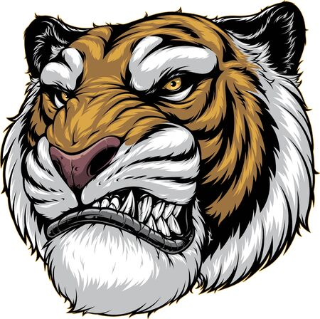 a ferocious tiger growls, shows a grin, on a white background. Illustration
