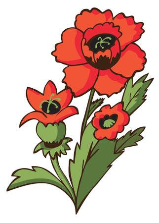 red poppy: flower red poppy on white background illustration