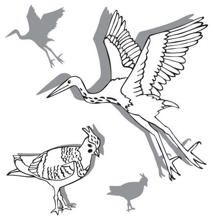 heron: illustration on white background two birds, Heron and lapwing silhouettes