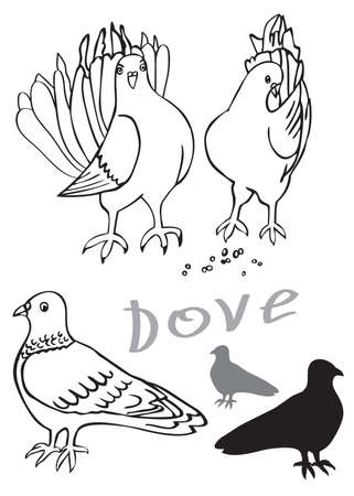 feeds: illustration on white background beautiful doves males and females birds