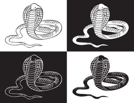 cobra snake: illustration on black and white background Cobra snake Illustration